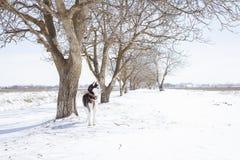 Cattività bianca Inverno immagine stock