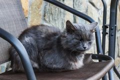 Cattivo e gatto grigio senza tetto depressivo triste fotografia stock