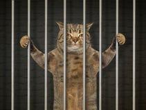 Cattivo gatto dietro le barre 2 immagini stock libere da diritti
