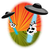 Cattle Abduction. Cattle being abducted by two UFOs in the countryside. EPS 8 vector illustration included, with CMYK global colors Royalty Free Stock Photography