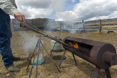 Cattle Branding Activities. Ensuring branding irons are hot. Cowboy reaches for an iron royalty free stock photos