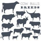 Cattle Breeding. Cow, Bulls Breed Icon Set. Flat Design Stock Photos
