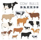 Cattle breeding. Cow, bulls breed icon set. Flat design Stock Image