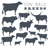 Cattle breeding. Cow, bulls breed icon set. Flat design Stock Photos