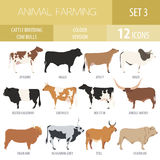 Cattle breeding. Cow, bulls breed icon set. Flat design. Cattle breeding farming. Cow, bulls breed icon set. Flat design. Vector illustration royalty free illustration