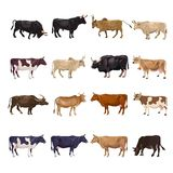 Cattle breeding set vector illustration