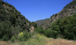 Cattle Canyon 2. Trees, grass and flowers in Cattle Canyon, San Gabriel Mountains, California Royalty Free Stock Photos