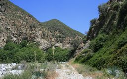 Cattle Canyon 4. Road through Cattle Canyon with trees, grass and yuccas, San Gabriel Mountains, California Stock Images