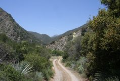 Cattle Canyon 5. Road through Cattle Canyon with trees, grass and yuccas, San Gabriel Mountains, California Stock Image