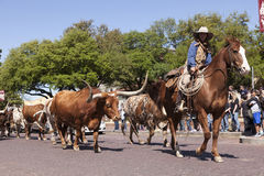 Cattle and Cowboys Fort Worth Royalty Free Stock Image