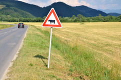 Cattle crossing traffic sign between meadow and road. Car pass by Royalty Free Stock Images
