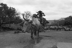Cattle drive sculpture royalty free stock image