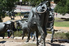 The Cattle Drive Sculpture at Pioneer Plaza in Dallas, Texas Royalty Free Stock Photography
