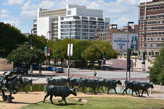 The Cattle Drive Sculpture at Pioneer Plaza in Dallas, Texas Stock Photography