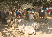 Cattle fair, Nepal Royalty Free Stock Photos