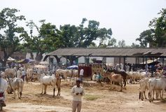A cattle fair at a rural Indian market Stock Photography