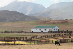 Cattle farm landscape Stock Image