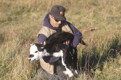 Cattle farmer holding calf Royalty Free Stock Image