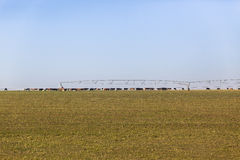Cattle Farming Landscape royalty free stock image