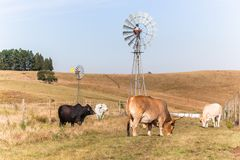 Cattle Farming Windmills Landscape Royalty Free Stock Photo