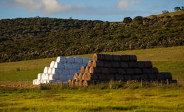 Cattle Feed Haystacks. In the field packed and ready for the winter season coming on the farmer. The photo images shows some bales wrapped the white plastic and Stock Photo