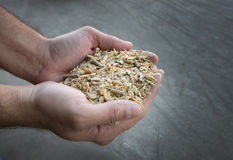 Cattle feed inhuman hands. Close up of farmer's hand holding compound cattle feed in palms Royalty Free Stock Photography