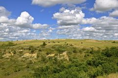 Cattle graze hilly and rugged country. Cattle graze the hills in the rugged Theodore Roosevelt Badlands of North Dakota stock photo