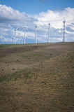 Cattle grazing beneath wind turbines Stock Photography