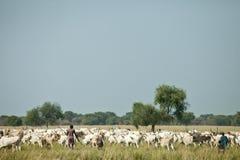 Cattle herders, Lilir Sudan Stock Image