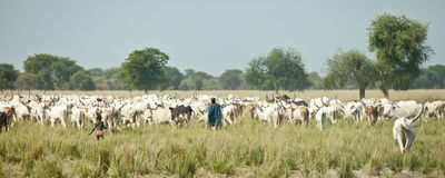 Cattle herders, South Sudan Stock Photography