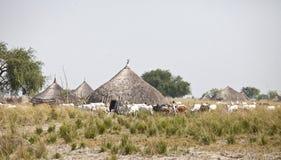 Cattle herding in Sudan Royalty Free Stock Image