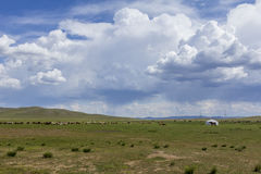 cattle, horses and ger in mongolian steppe Royalty Free Stock Photos