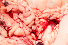 Cattle Internal Organs Close Up Royalty Free Stock Photo