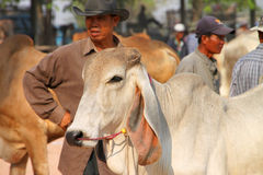Cattle market Stock Photos