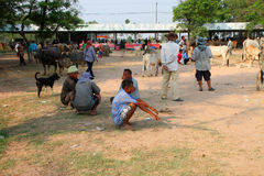 Cattle market Stock Photo