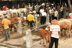 Cattle market Royalty Free Stock Photos