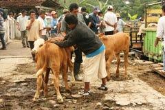 Cattle market Stock Photos