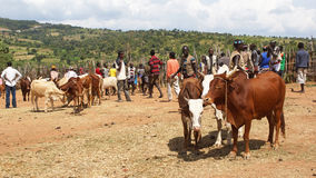Cattle market, Key Afer, Ethiopia, Africa Royalty Free Stock Images