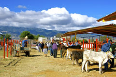 Cattle market, Mexico Royalty Free Stock Images