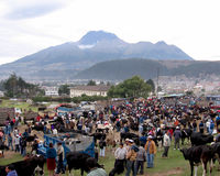 Cattle Market, Otavalo Royalty Free Stock Images