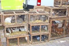 Rabbits, pigeons, guinea pigs at the cattle-market in Sineu, Majorca Stock Images