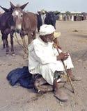 Cattle market in Tafilalet, Morocco stock image