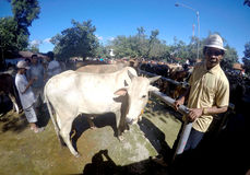 Cattle market Stock Images