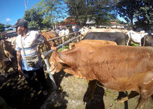 Cattle market Stock Image