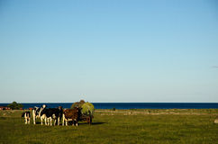 Cattle by an old water tank Royalty Free Stock Photo