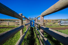 Cattle Pen Corral Lane Farm. Cattle pens corral sorting cattle to chemical wash for ticks parasites and veterinary inoculations Royalty Free Stock Photo