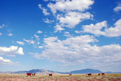 Cattle Ranch. A landscape view of a cattle ranch on a cloudy day royalty free stock photography