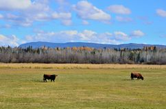 Cattle ranch. In the Cariboo region of British Columbia Canada Stock Photo
