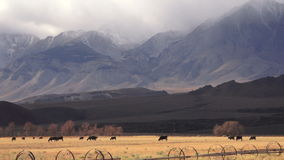 Cattle ranch at foot of mountains stock video footage