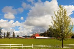 Cattle Ranch and Sheep Farm in Rural Oregon. Cattle Ranch and Sheep Farm with Red Barn and White Picket Fences in Rural Clackamas Oregon Royalty Free Stock Images